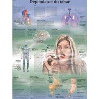 Planche anatomique - Prévention anti-tabac