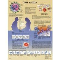 Planche anatomique - VIH et SIDA