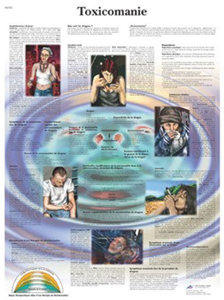 Planche anatomique - Effets de la drogue
