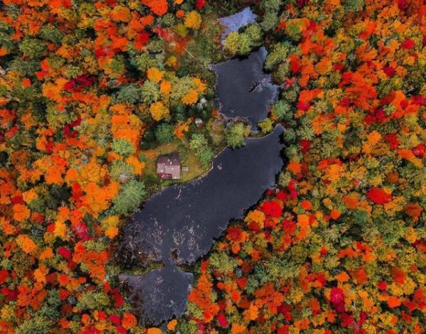 Photo reforest