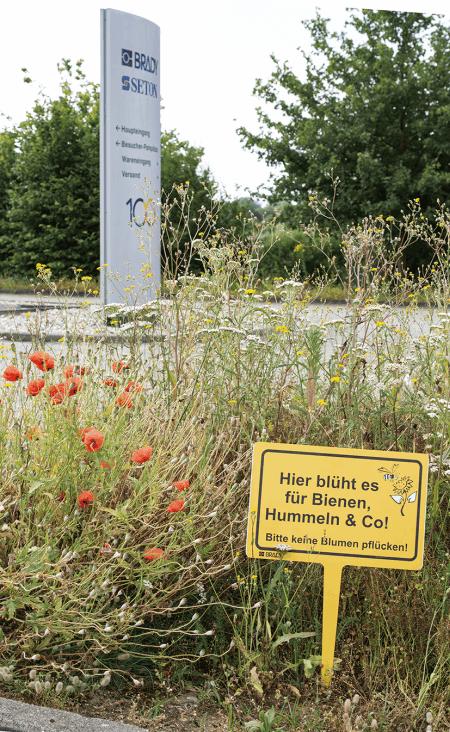 Schild Bienen Blumenwiese