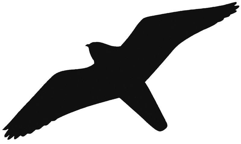Raamstickers en stickers voor glazen deuren - vogels